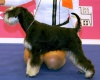 "61 International Dog Show "" CACIB Ljubljana II"". CRUFTS 2014 Qualification (Ljubljana, Slovenia)"